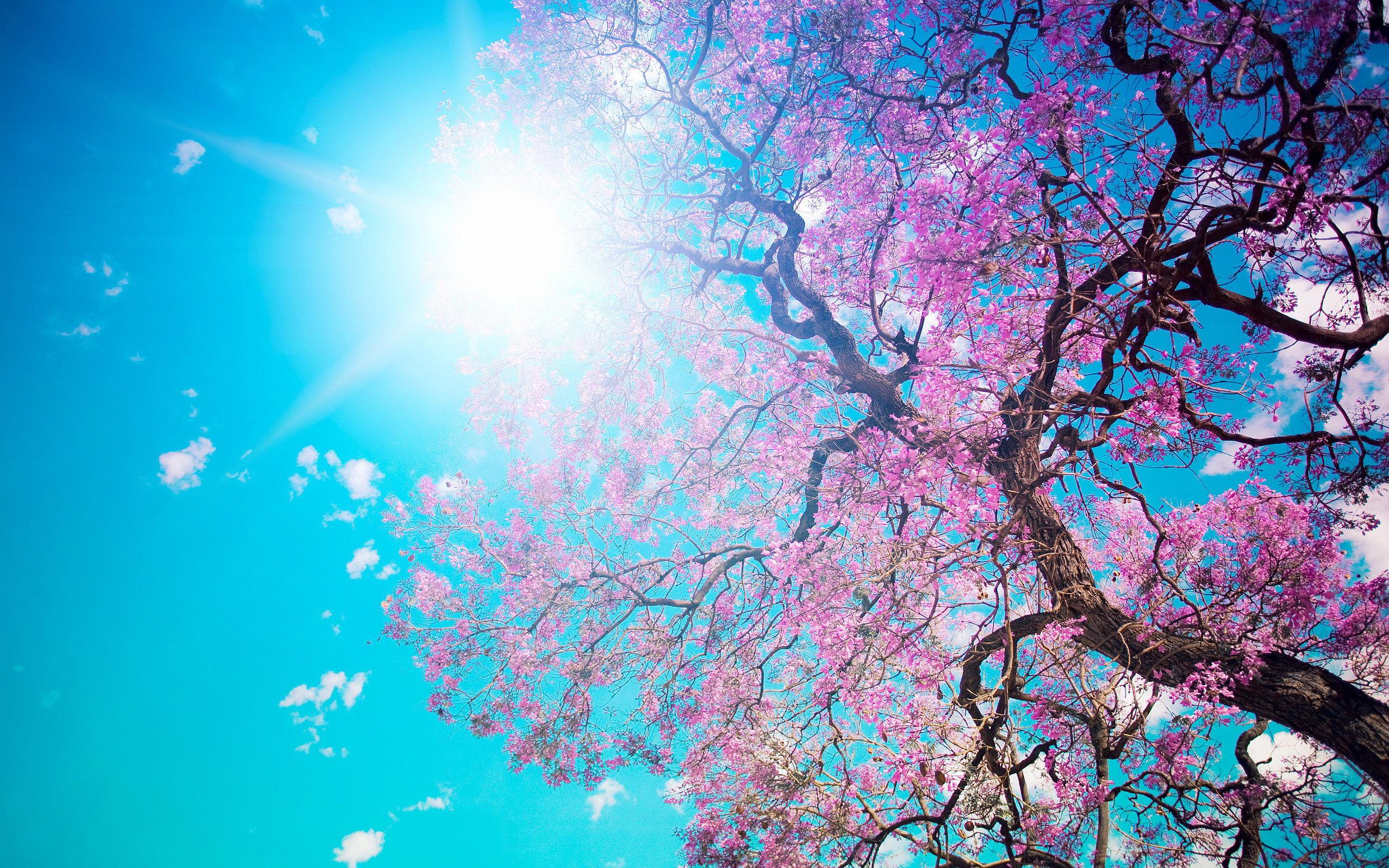 Spring blossom sunshine